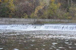 If you look closely, you will see a salmon trying to jump over the Humber River rapids at the Old Mill dam near Old Mill Toronto. The annual salmon run on the Humber River will be the topic of a future series of blog posts - again, when time permits. Jaan Pill photo