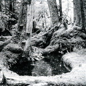 """Photo from p. 119, Islands' Spirit Rising: Reclaiming the Forests of Haida Gwaii (2015) offers a sense of the forest ecology of Haida Gwaii. Caption reads: """"Old forest ecosystem in Windy Bay, Lyell Island. (Richard Krieger)."""""""