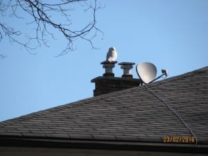 Great Snowy White Owl on 35th Street. Photography by: Steve of Long Branch