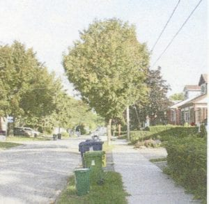 Figure 84. (Topic: Predominant Conditions of Street Trees in Long Branch.)