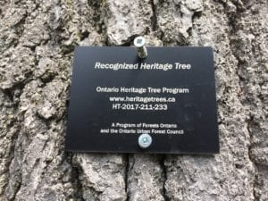 Newly installed plaque at Heritage Tree. Jaan Pill photo